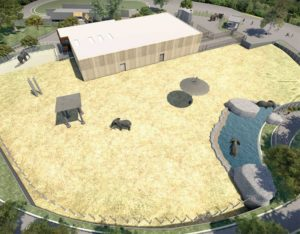 elephant enclosure